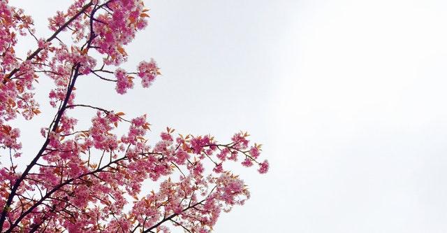 بهار نوروز 1397 تحویل سال